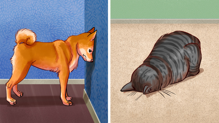 7 Possible Reasons Why Your Pet Could Be Pressing Its Head Against the Wall